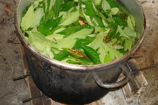 Ayahuasca Can Help You Communicate with Plant Spirits, and Heal Your Body and Mind